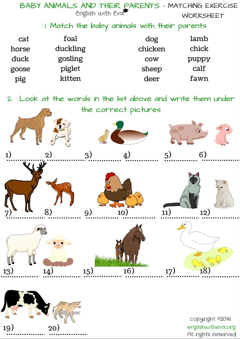 baby animals worksheets - DriverLayer Search Engine