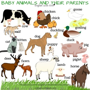 BABY ANIMALS AND THEIR PARENTS